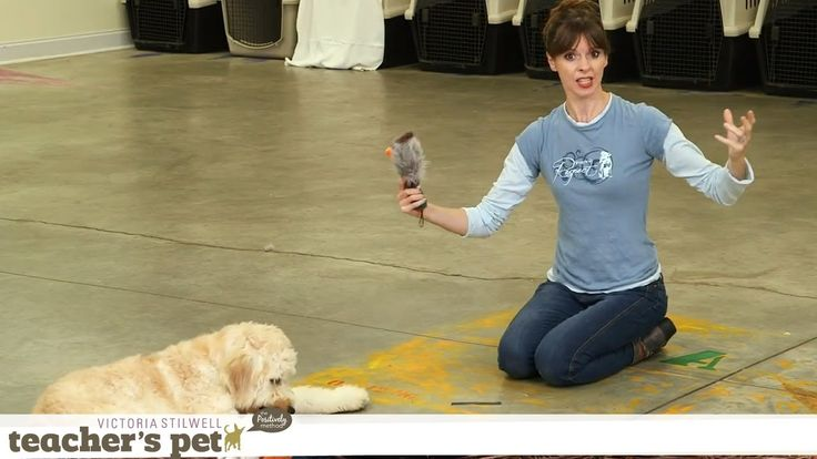 Teach a Dog to 'Take It' and 'Drop It' | Teacher's Pet With Victoria Sti...