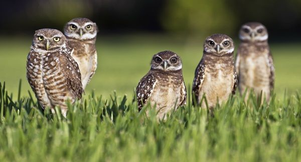 Great Real Owl Pictures to Admire (8)