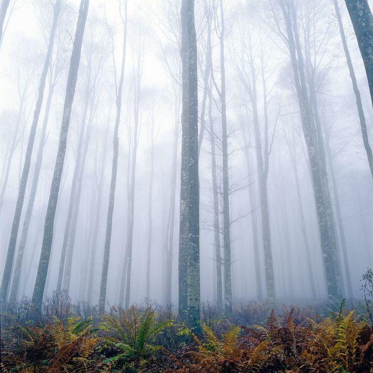 La foresta del #Cansiglio in #Alpago  http://www.alpagocansiglio.eu/it/sport-e-natura/natura-in-alpago