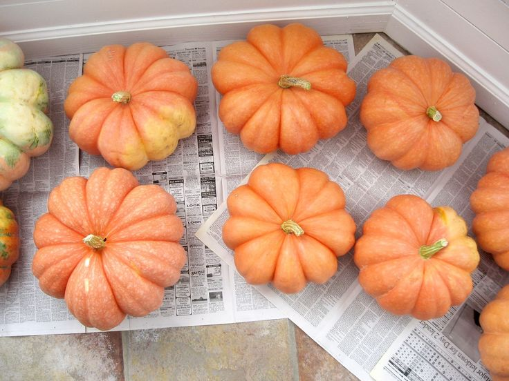 Learn how to preserve pumpkins for décor or storage with this easy tutorial.