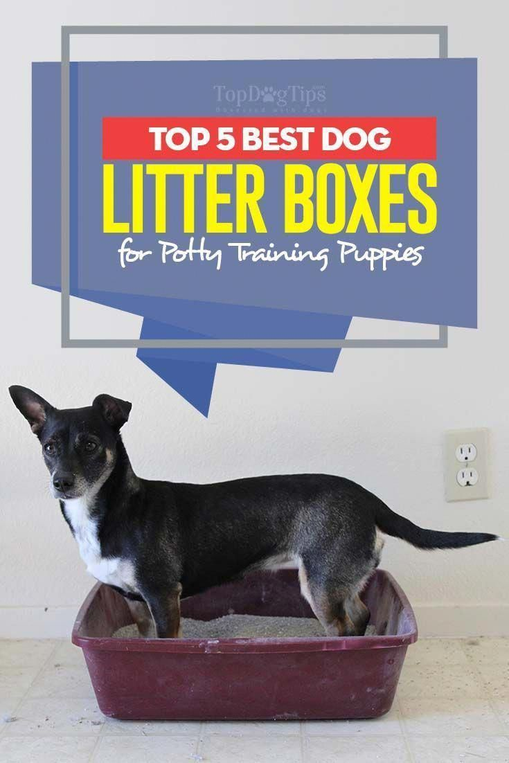 Top 5 Best Dog Litter Box Choices For Puppy Potty Training In 2017