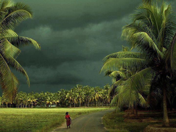 Colors of India : Palakkad, Kerala during Monsoon #Kerala #Monsoon #holiday #backwater RT Guys