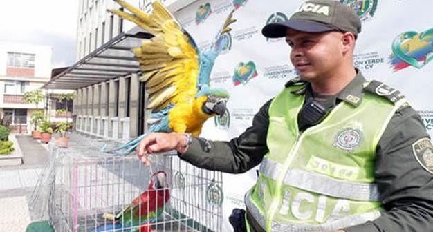 ¡Hermosas guacamayas regresaron a la libertad! las rescatamos y ahora están en bosques tropicales.