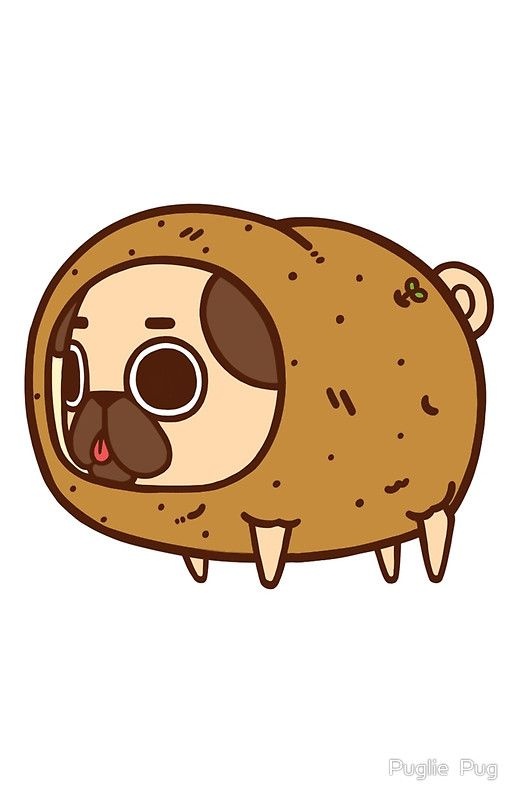 1673 best i love pugs images on pinterest