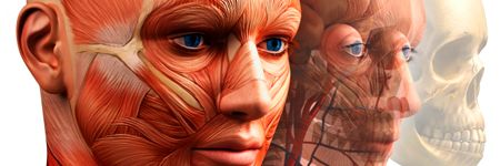 Human Anatomy and Physiology - Course Details at ed2go