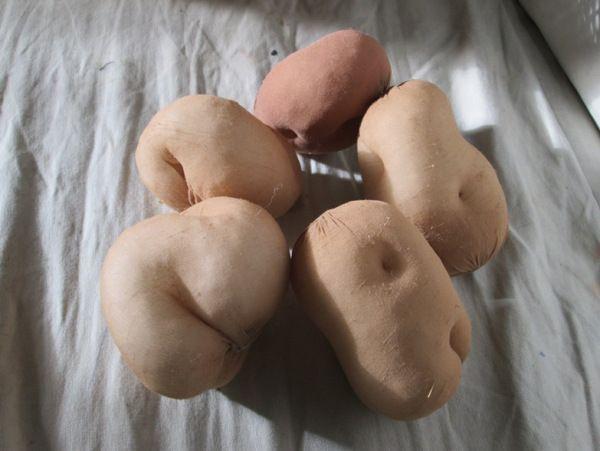 Legutóbbi nagyobb munkám zöldségek és gyümölcs(ök) készítése volt. A gyerekek iskolájában megrendezett karácsonyi vásárra készült el az első nagyobb adag, azóta kaptak zöldséget Réka, Vanda és Zsuz…