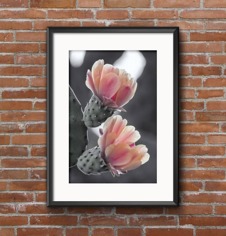 Visit my Etsy store to see what other prints are available. cactus flower, black white and pink print, prickly pear wall art, pastel decor, gift for her, pastel flower print by mbphotoprints on Etsy