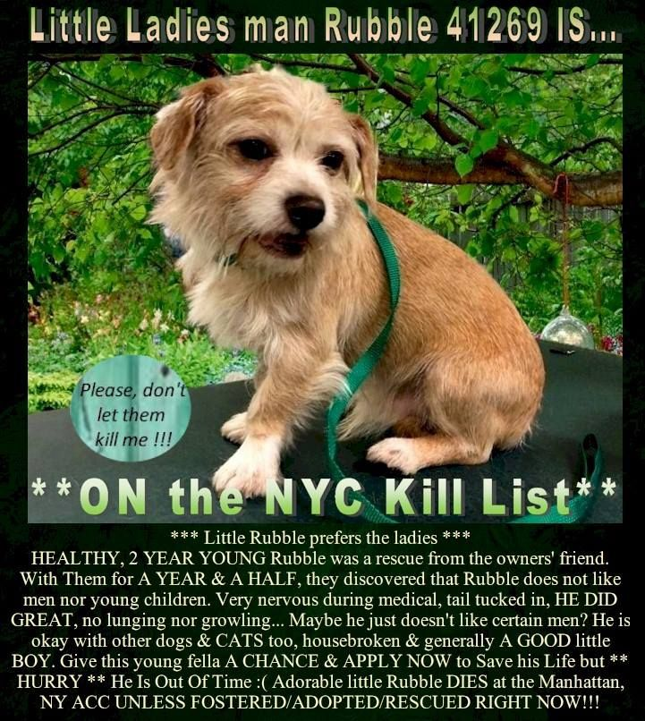 Pin On Ny Nj Little Paws Small Breed Dogs In Need Of Foster Adoption Rescue
