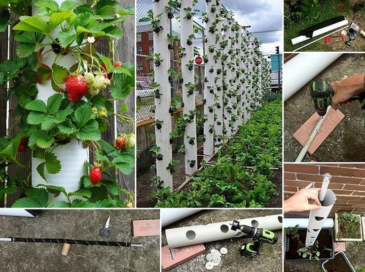 vertical gardening palissade de fraises