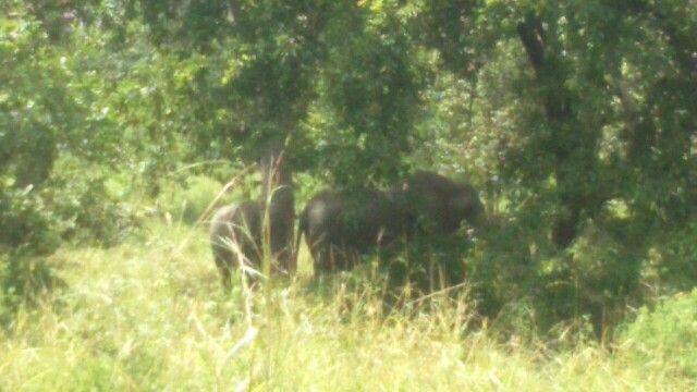 Jaaaa eindelijk ook olifanten gezien!
