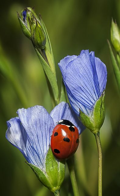Ladybug... the only bug that doesn't scare the crap out of me!!