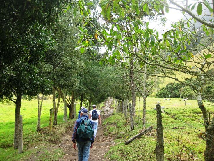 Salento y Cocora, magia y tranquilidad en el Quindío | Turismo Eje Cafetero