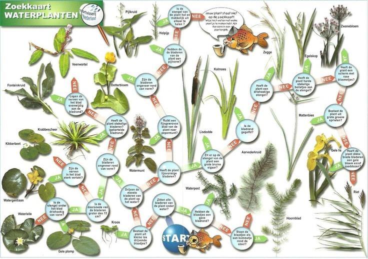 Zoekkaart waterplanten