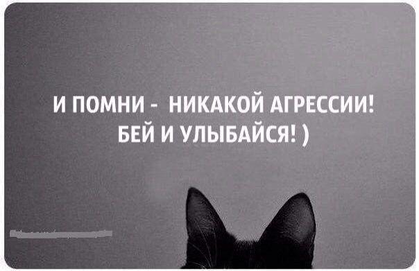 Funny cat по русски