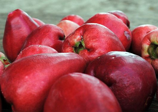 """La pomalaca, conocida también como la """"manzana rosa"""", es un fruto que si bien en apariencia nos recuerda una manzana, en propiedades y características difiere de la pomácea. Perteneciente a la familia de los mirtos, tiene un sabor dulce y fresco"""