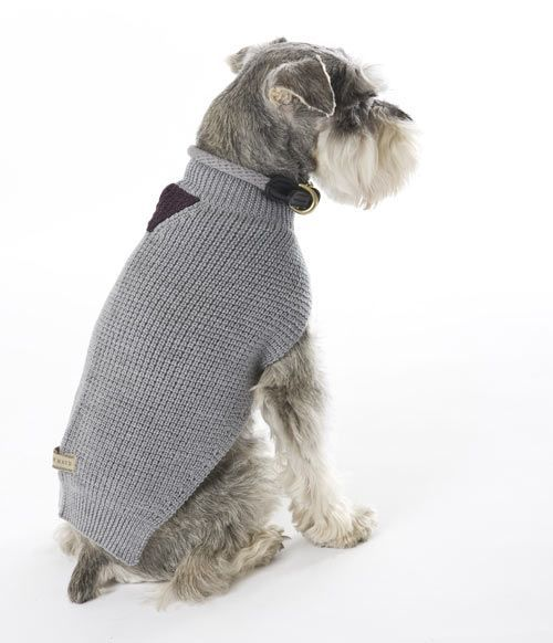 Maud Dog Adoption