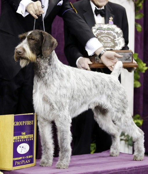 11 Best Dogs Images On Pinterest Doggies Labradoodles And Dogs