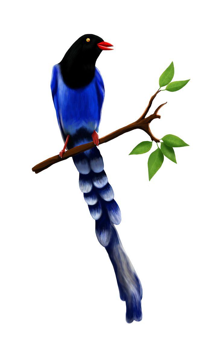 """""""Birdy """", a project on @Behance ::  https://www.behance.net/gallery/21236483/Birdy-"""