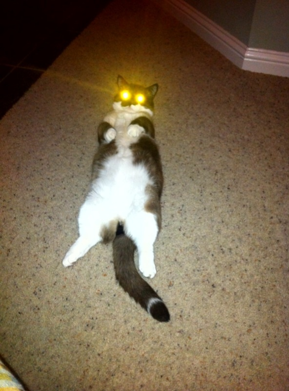 39 best images about laser cats or cats in costumes on
