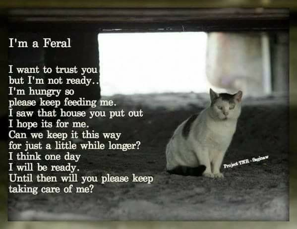 It Takes A Long Time To Develop Trust Have Patience Feral Cats Cats Cat Care