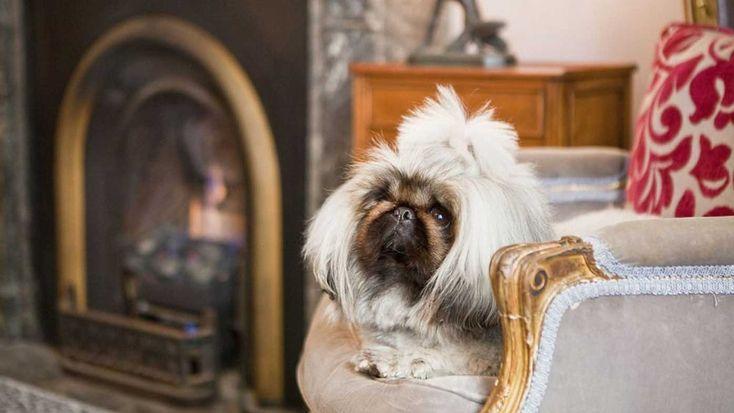 Dog friendly hotels Australia