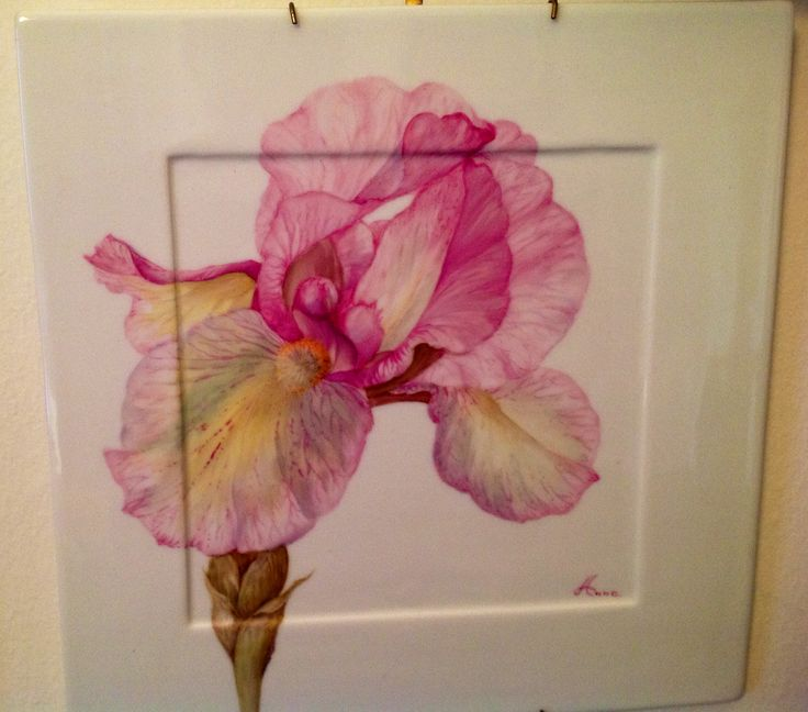 Iris  su porcellana dipinti da AnnaMaria Mattedi in un soggiorno studio a LENGRIESS con ANDREAS KNOBL