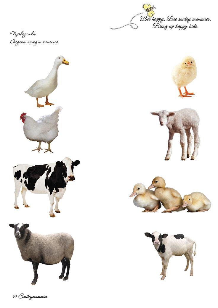 Smileymommies - раннее развитие счастливых детей: ТН Ферма. Домашние животные. Рассылка 1