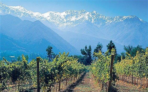 Chile's wine country with view of Andes - on my list.....