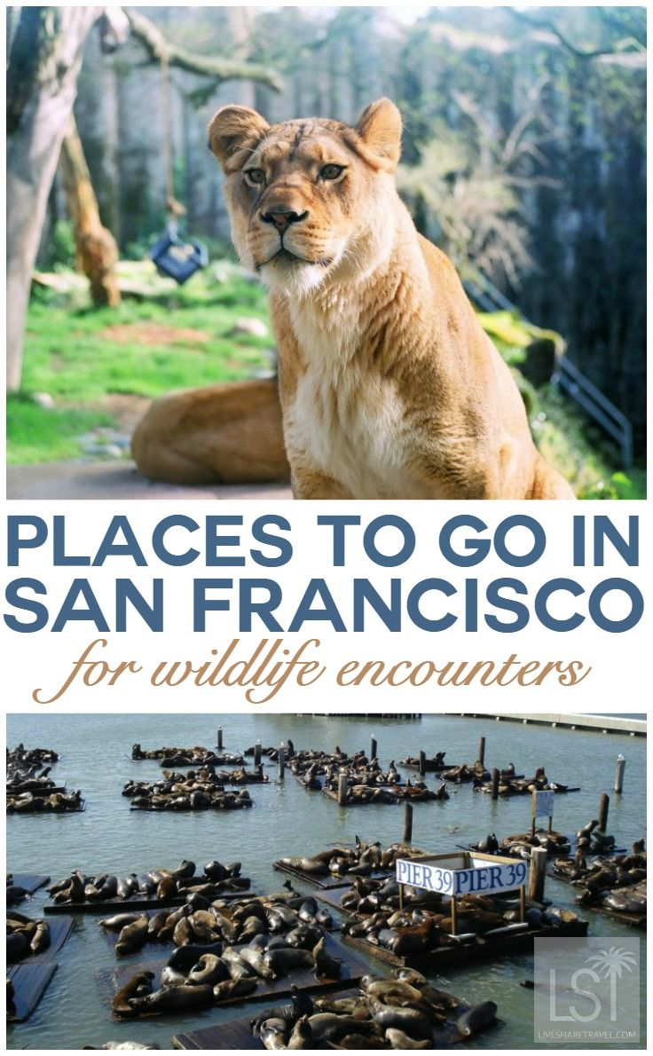 From the Golden Gate Bridge to the infamous Bay Area, San Francisco is one of the most exciting and culturally diverse cities in the world. Attracting over 16 million visitors each year and boasting some of the finest luxury experiences in the US, there are many cool places to go in San Francisco. Discover the best of this west coast America city in our travel guide to the City by the Bay.