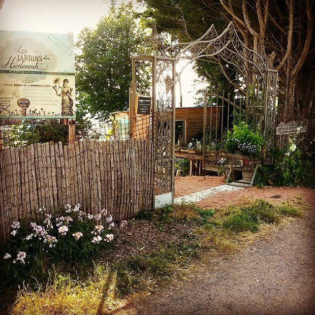 """pépinière auvergne de plantes vivaces """"Les Jardins des Hurlevents """" http://www.plantes-vivaces-hurlevents.com/"""