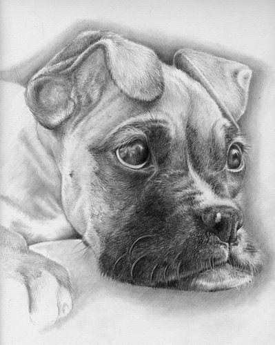 Brindle Boxer Dog Drawings Realistic Wiring Diagrams