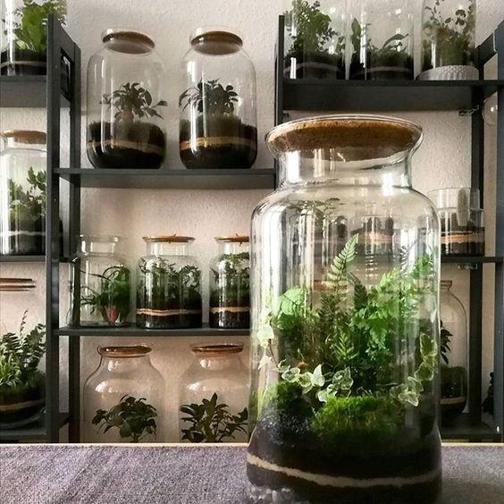 Terrarium: maak zelf mini-ecosysteem in een glazen pot