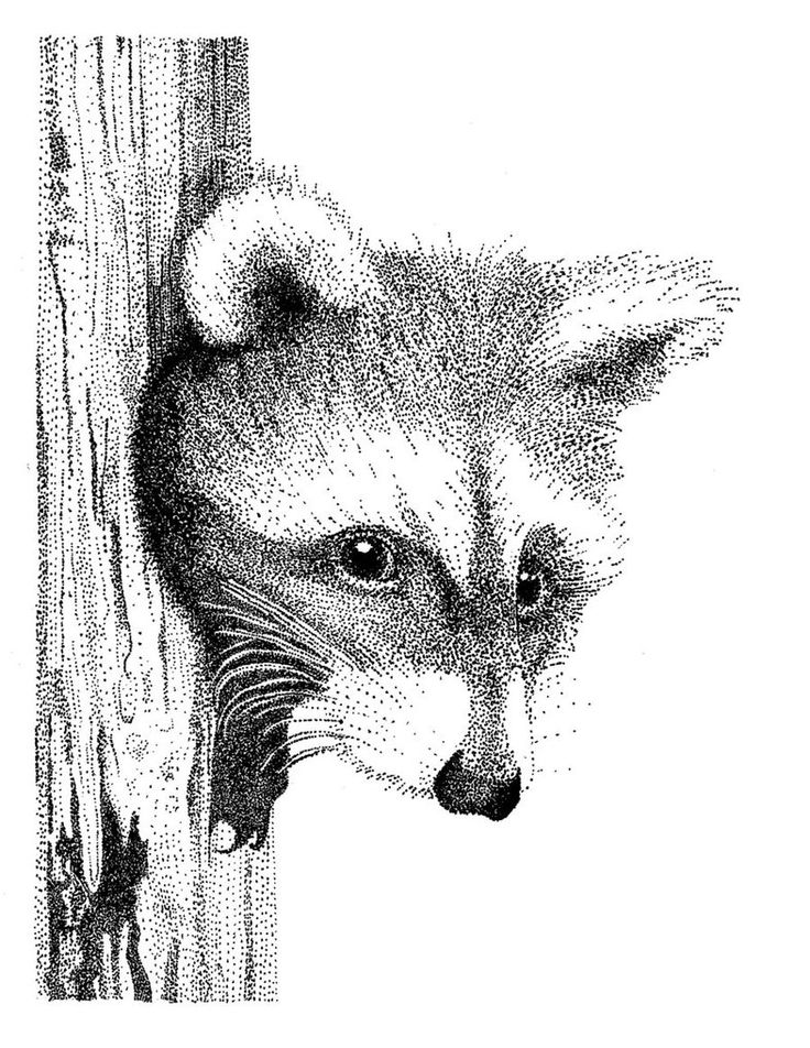 stippling | Raccoon Stippling by Goldencloud