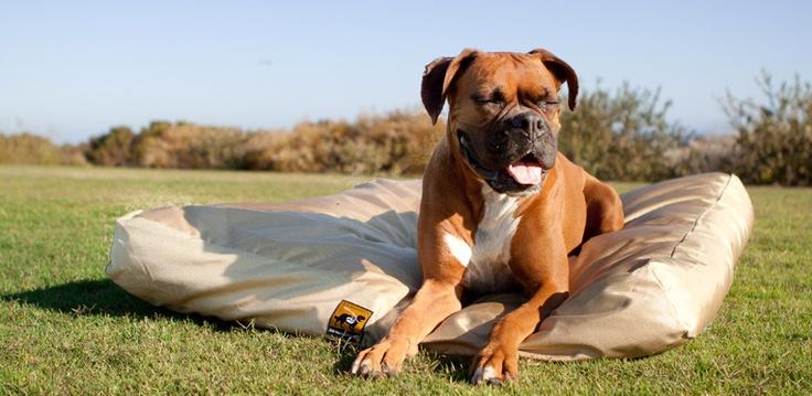 Welcome to www.k9ballistics.com - Strongest Chew Proof Dog Beds