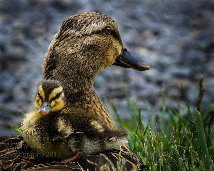 201 Twitter Fotos De Aves Aves Artistas