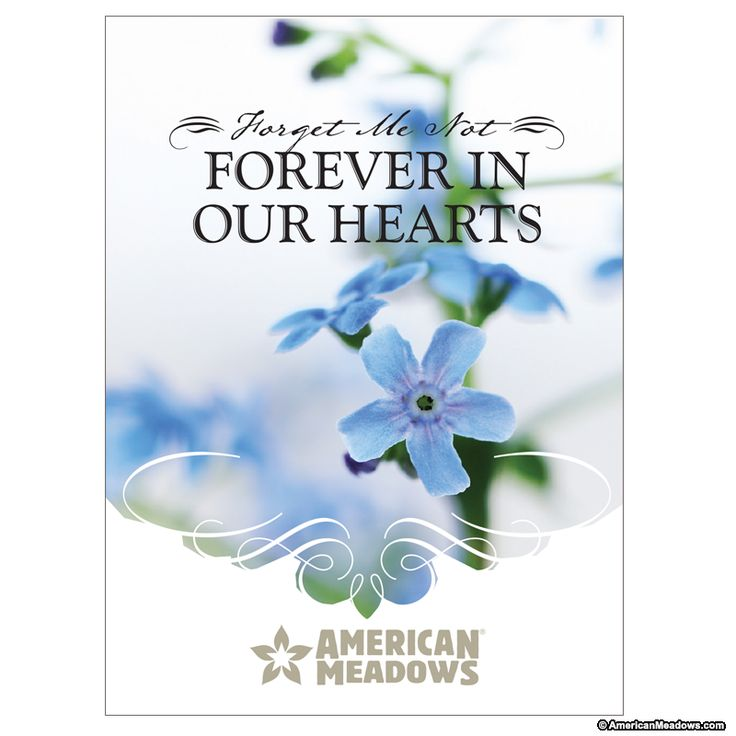 10 Forget Me Not Seed Packet Favours By Wedding In A: Forever In Our Hearts Seed Packet