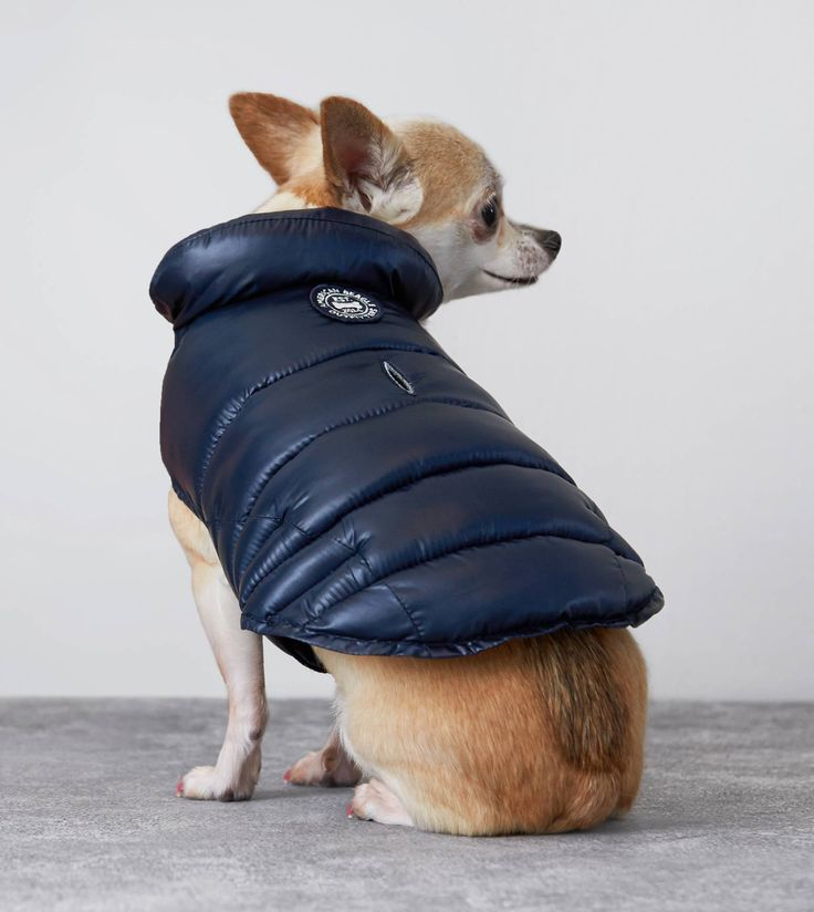 $23.97  Navy American Beagle Outfitters Puffer Jacket