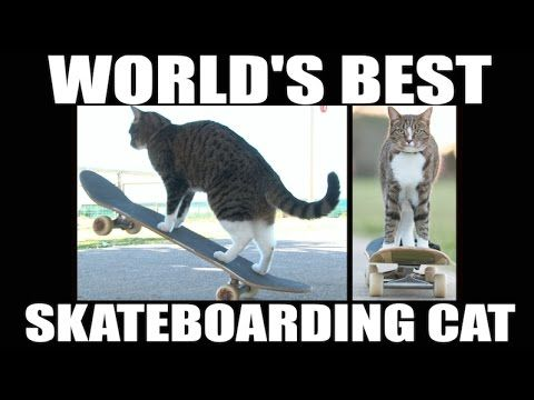 This Kitty is Awesome!!!!!Super Skateboarding Adventure! - Go Didga the cat! ❤❤❤❤❤