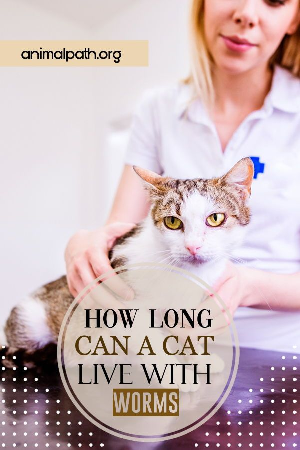 How Long Can A Cat Live With Worms Cats Newborn Kittens Indoor Pets
