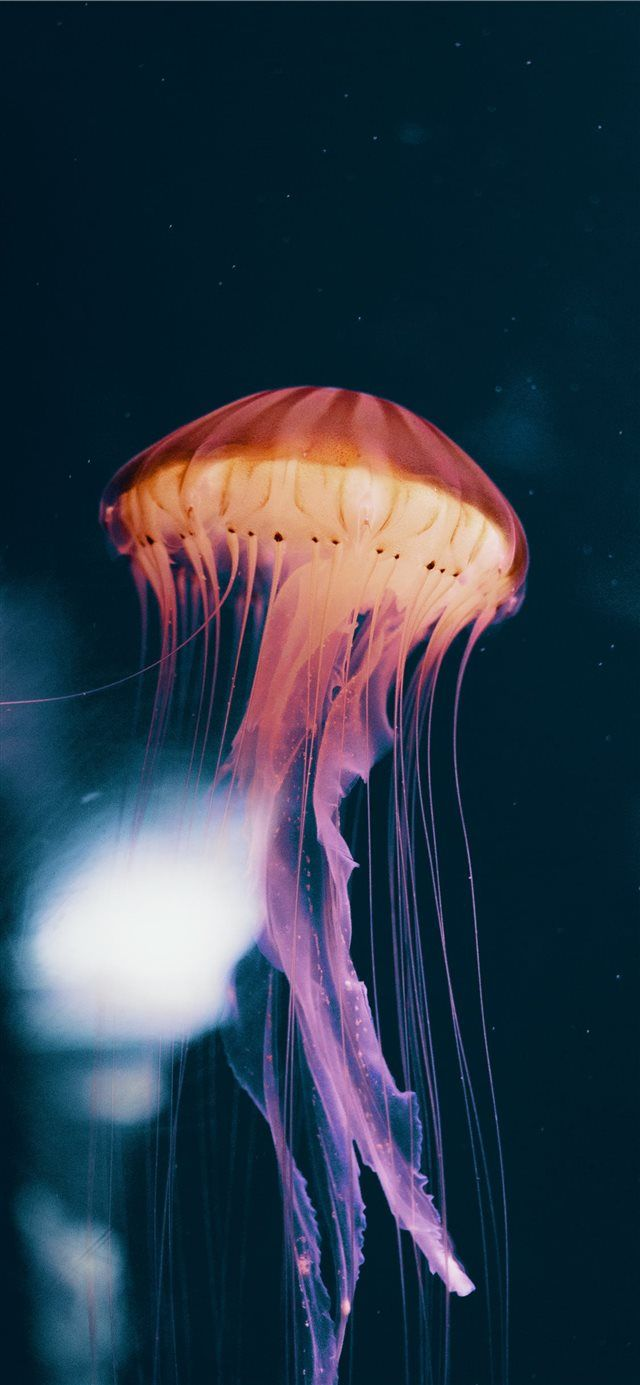 Neon Jelly Iphone X Wallpapers With Images Android Wallpaper
