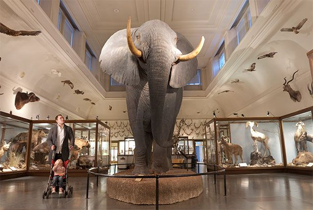 GÖTEBORGS NATURHISTORISKA MUSEUM - Sök på Google