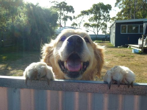 265 best for the granddogs images on pinterest doggies pets and this is santee solutioingenieria Images