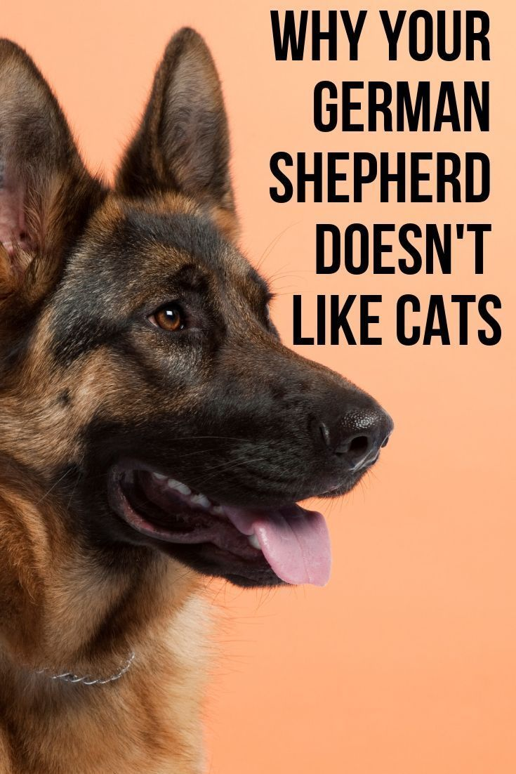 This Post Will Show You What Is Causing Your German Shepherd Not