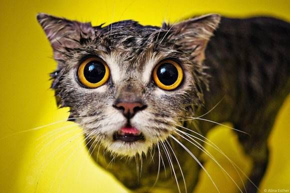 wet cat ねれにゃんこ