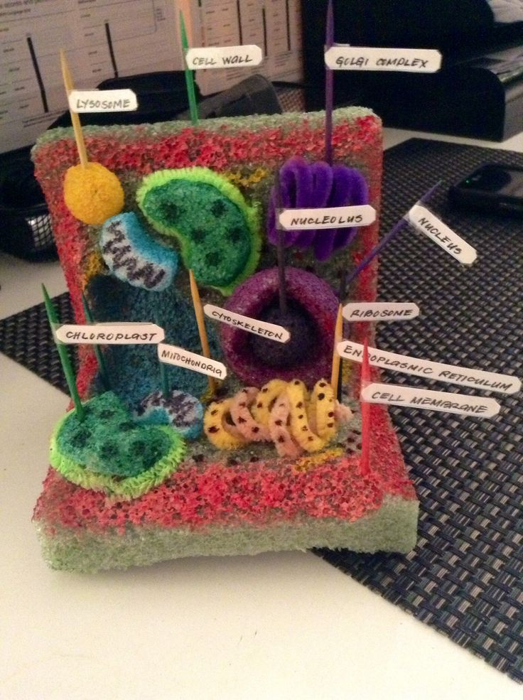 My Plant Cell Project. Made of styrofoam, pipe cleaners, toothpicks, and labels. I used a hot glue gun and scyto knife.