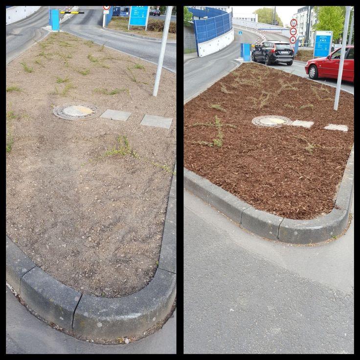 25+ parasta ideaa Pinterestissä Rindenmulch Vorgarten gestalten - vorgartengestaltung mit rindenmulch und kies
