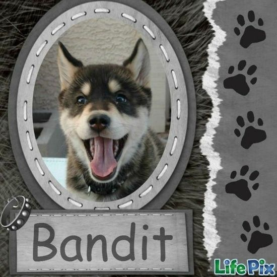 simple #dog #Scrapbooking #page idea  scrapnparadise.webs.com in Oklahoma - Soon to be your favorite scrapbook retreat