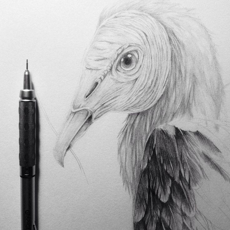 Black Vulture... artwork by Chandra Kartika Gunawan. Check her ig to know more