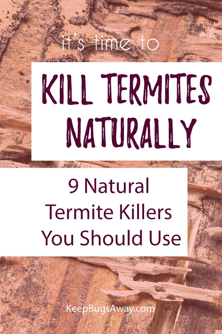 how to kill termites naturally and fast: top 9 natural termite