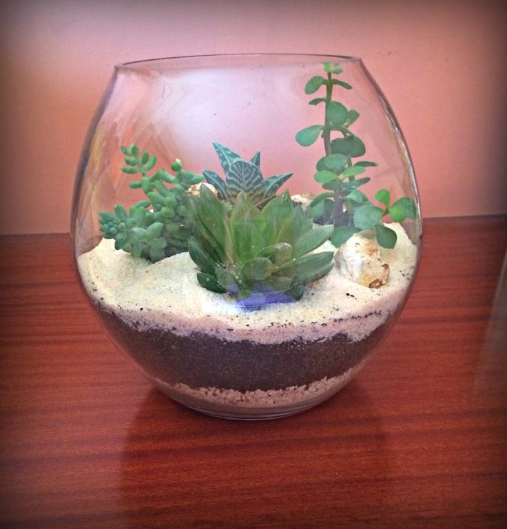Desert Terrarium A harmonic color combination of cream quartz sand with natural stones and specially selected succulents, for the creation of a tropical microclimate. Ideal for the decoration of the house or work. dimensions: HEIGHT: 20cm. MAXIMUM MEAN PERIMETER: 64cm. For more information please send us inbox and we will contact you.